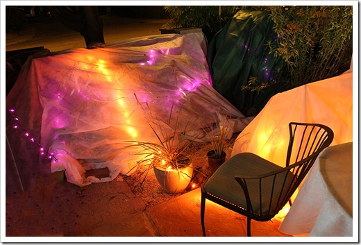 120116_frost_blankets_night1