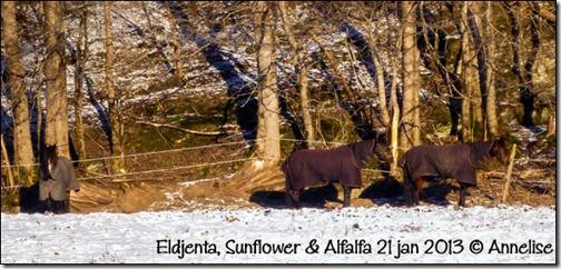 2013-jan21-alf_02