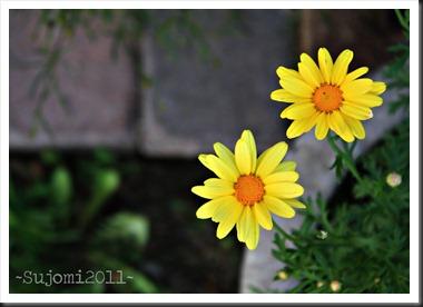2011 06 01 IMG_2478w
