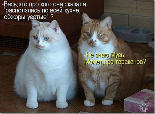 75e2ba494db0e0a4ca2bc346d4e_prev