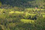 Rizière dans la région de Munduk