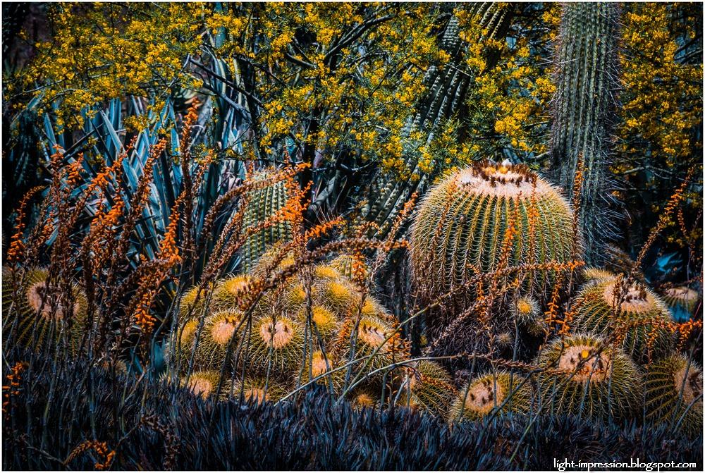 Light Impressions-Cacti Garden 2