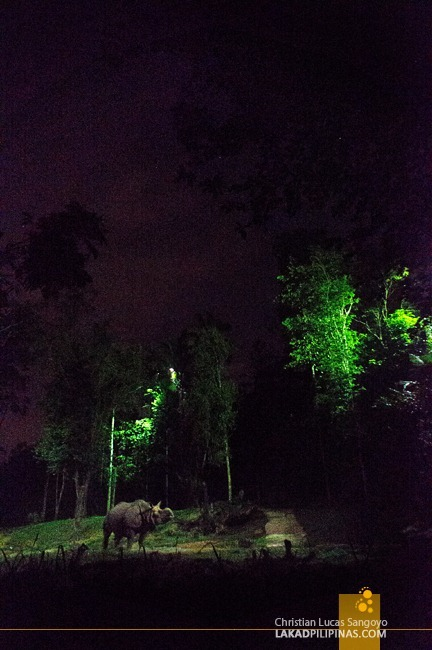 A Rhino at Singapore's Night Safari
