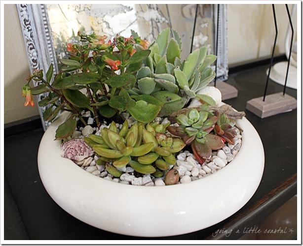 succulents_edited-1