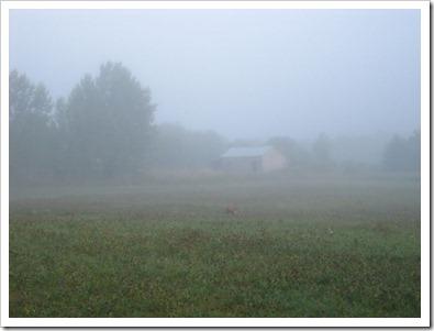 20120802_morning-mist_004