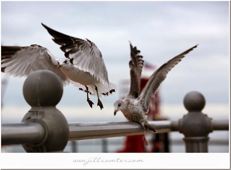 birdflight1