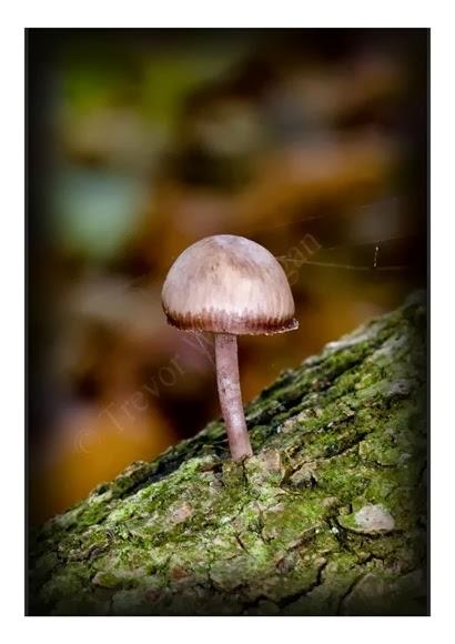 Mini Fungi 8
