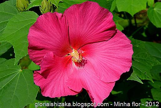 Glória Ishizaka - minhas flores - 2012 - 6