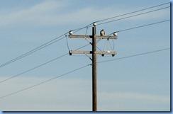 7196 Texas - US-77 North - bird of prey