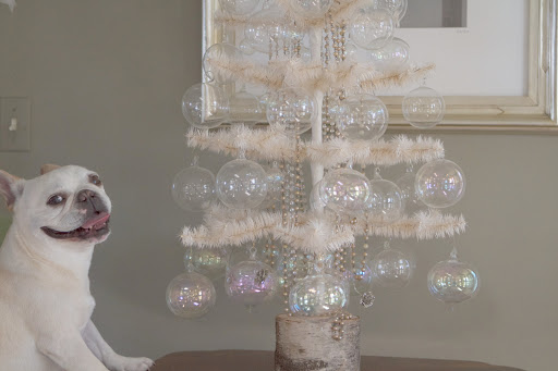 Francesca, did you see this amazing feather tree decorated with clear glass balls here in the bird room?