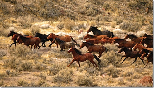 wild horses photo from internet