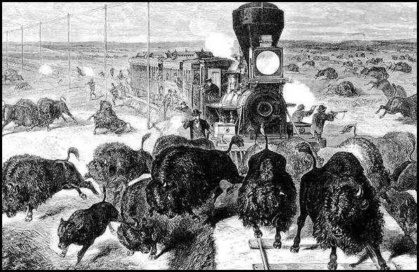 Le massacre des bisons en Amérique-5