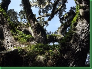 Bulow Creek &  Tamoka SP (34)_thumb[1]