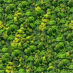 a6b7Forest-Seamless-Pattern-1508113