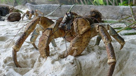 crab9.img_assist_custom-600x337