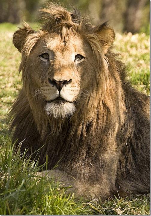 awesome-animal-haircuts10