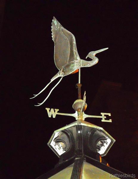 5. nightbird-kab