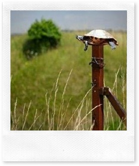 tortuga sobre un poste