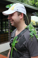 Steve and the geckos