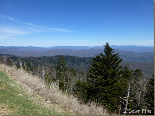 Clingmans dome_002