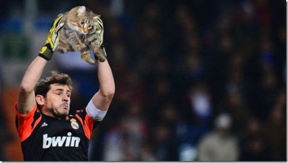 cats-sports-photoshop-2