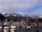 Valdez Harbor by Bearfoot Guides