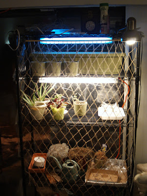 Plant stand with handmade jute net to keep the cat out of the plants