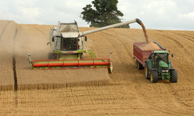 Poor weather has devastated the British wheat harvest in 2013. Photo: David Bagnall / Alamy