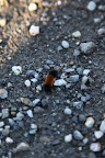 I think this is a woolly bear caterpillar!
