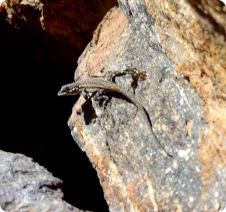 8-little-lizard