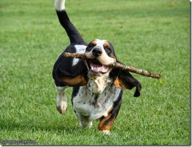 Basset_Fetcher
