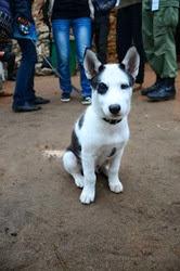 Guča, el perro