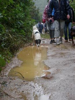 Dogs Trekking 4 (284)