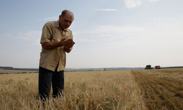 A farmer checks barley in a field south of Moscow. During the summer of 2012, Russia banned grain exports after a severe drought reduced harvest estimates. Ivan Sekretarev / AP