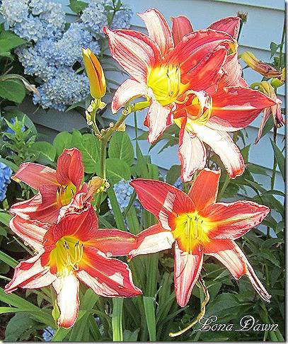 Lilies_Sunlight