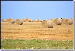 Roadtrip Titchwewll RSPB D3100  12-08-2012 15-03-37