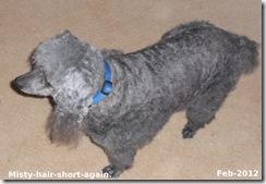 Misty-haircut-Feb-2012