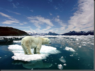 melting-ice-polar-bear-on-206311
