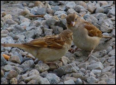 birds0728 (2)