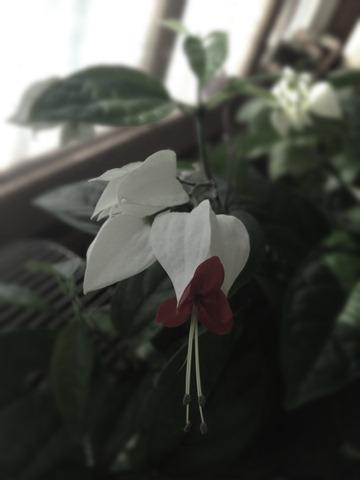 2011.11.8-1 iゲンペイボク