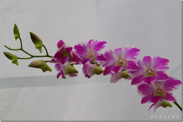 2013台南蘭花展32