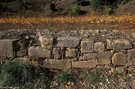 Murs de pedra seca amb carreus i dovelles de l'antiga cartoixa de Scala Dei.Vinyes del Celler Scala Dei. DOQ Priorat.La Morera de Montsant, Priorat, Tarragona2003.11