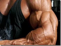 Muscles genetics