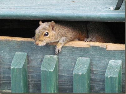 squirrell in dumpster