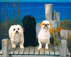 Christ S. used this photo of his sister's dogs, Cookie, Muffin, and Blue, as this year's Christmas card.