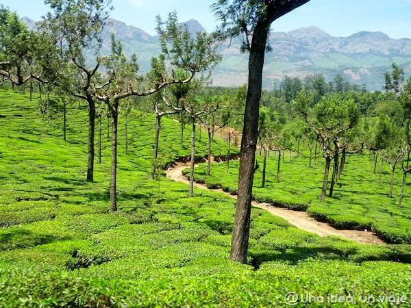 India-Kerala-fotos-con-colores-21.jpg