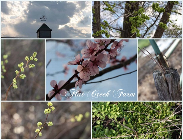 spring12Collage2
