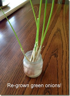 Re-grown green onions!