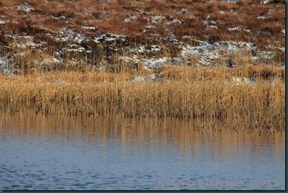 24-reeds