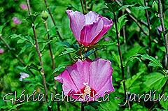 Glória Ishizaka - Jardim Botânico Nagai - Osaka 30